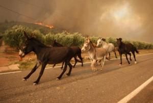 caballos incendio