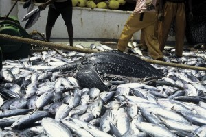 Fishing & Bycatch East Africa