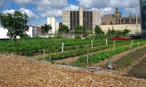 Detroit-de-la-ruina-total-al-desarrollo-verde-gracias-a-huertos-ecologicos