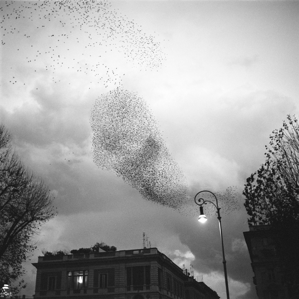 paolo-patrizi-starlings-4
