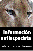 www.acabemosconelespecismo.com