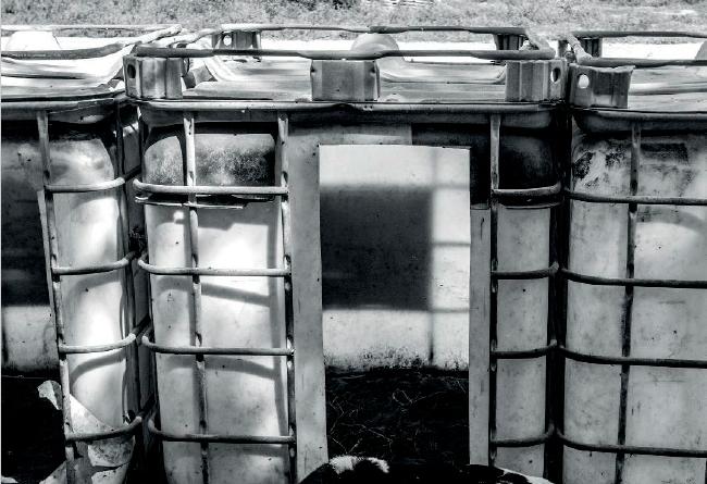 Portada del libreto 'violencias, protección y apariencias, el maltrato animal en el código penal. Una vaca tumbada frente a unos bidones agricolas